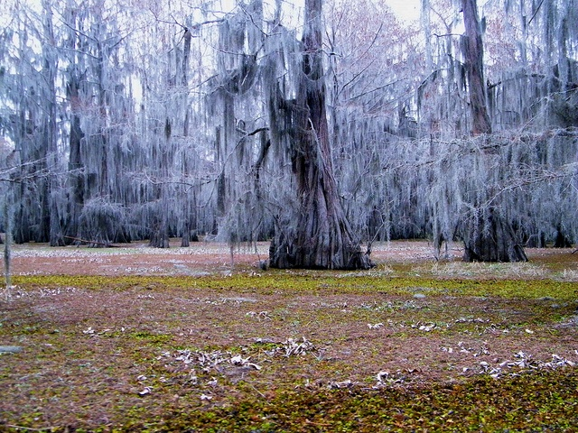 unspoiled and mysterious paradise | Big Cyprus Bayou, Caddo Lake, Texas