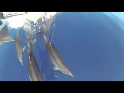 Dolphins in Greece with Poseidon Charters