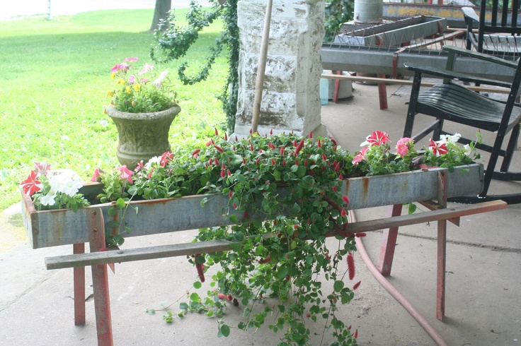 Vintage chicken feeder would also be nice with pink flowering ever bearing strawberries. Less runners and berries in different seasons. Nice!