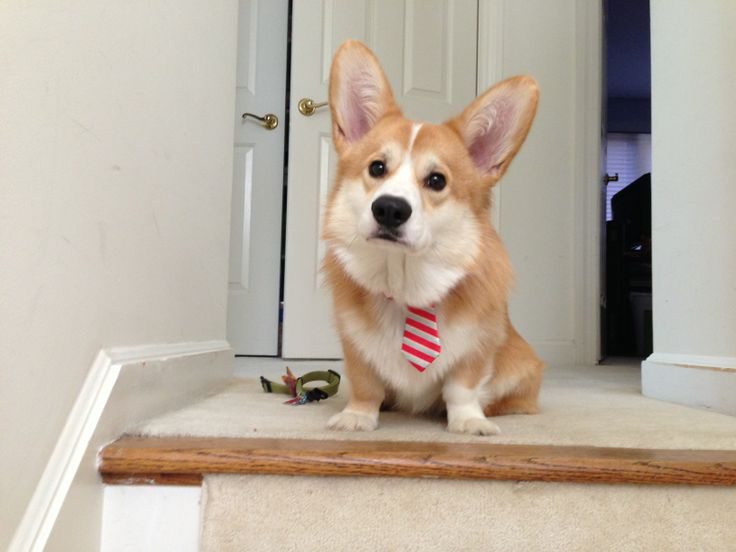 Getting ready for a job interview.