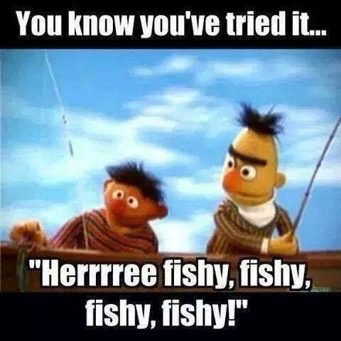 Funny fish memes - photo#29