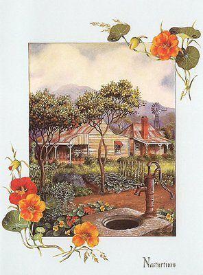 Cottage Garden Nasturtium Pump Well Blank Greeting Card Gift Spree