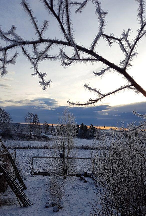 Elsker min vinterhage