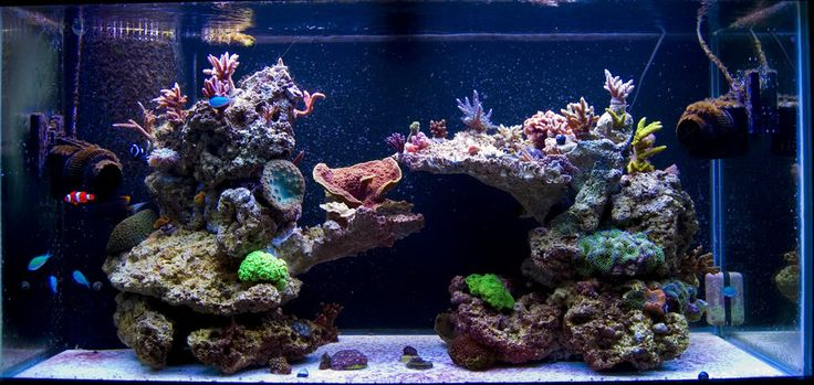 55 gallon live rock aquascape pictures of just your for Aquarium fish online