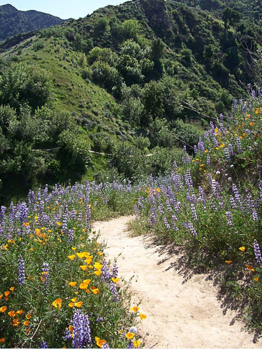 Take in the #natural #beauty surrounding the #trails at Towsley Canyon