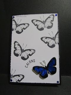 BaRb'n'ShEll Creations - Darkroom Door Butterflies Cairns/Australia Cards - made by Shell