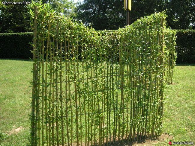 Clôture végétale en saule tressé