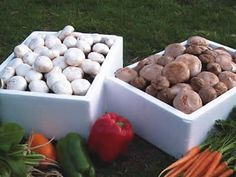 instructions for growing mushrooms without a kit...and I was literally just wondering about growing mushrooms this morning! I love mushrooms for cooking with...the good kind that is! :)