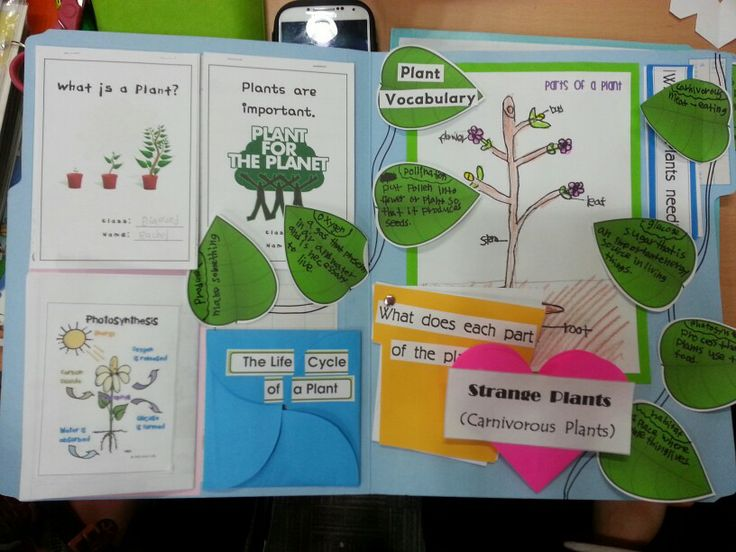 Why Are Flowers An Important Part Of Plants Manual Guide
