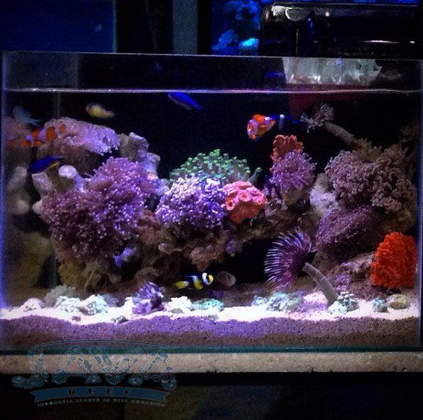 dekorasi aquarium air laut untuk hotel di jakarta pusat