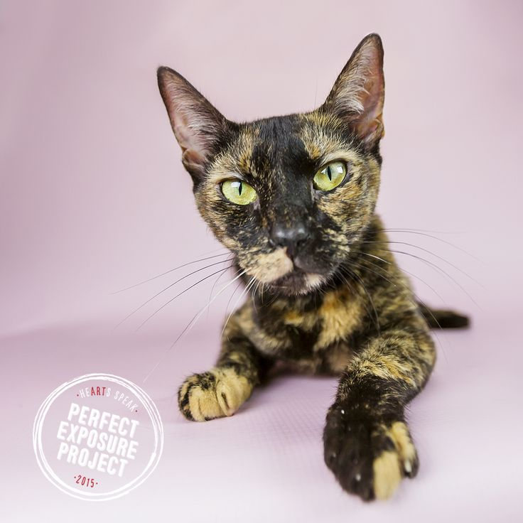 Crackle was a great model as Manatee County Animal Services staff and volunteers learned to take professional portraits of adoptable pets during our Perfect Exposure Project!