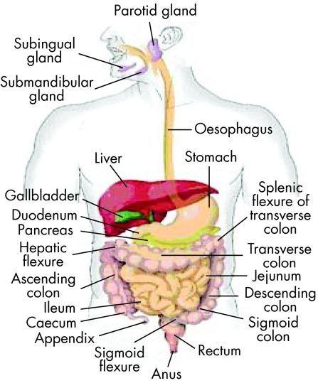 health information digestive diseases