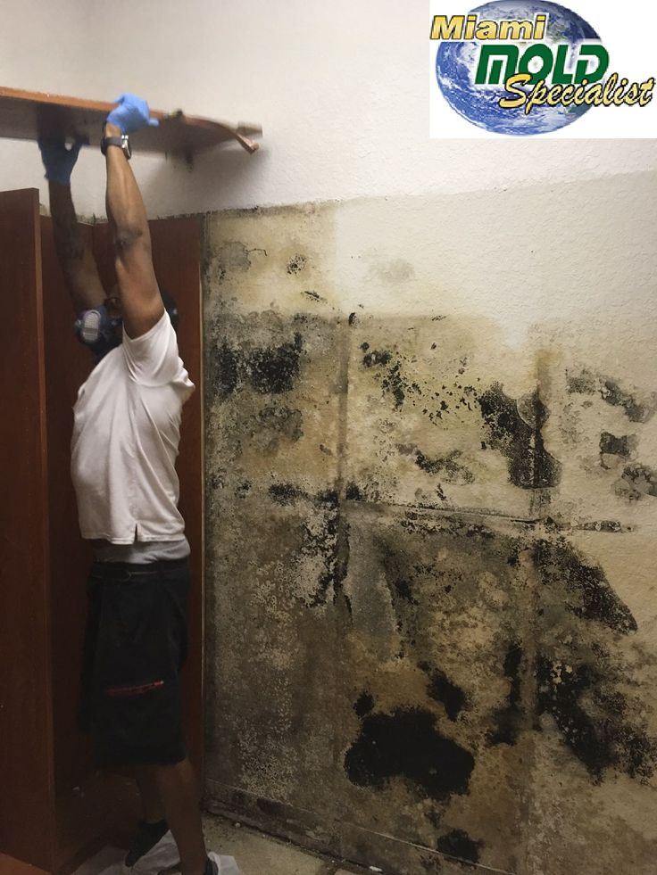 If you are not sure about mold presence at your home, Miami Mold Specialist offer #mold #inspection services to #detect the mold #presence inside your home.
