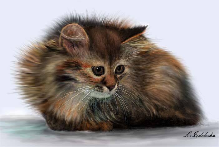 Grafika komputerowa, kotek