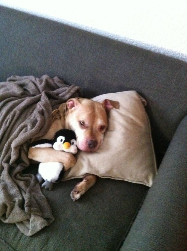 """A dog who is taking a """"sick day"""" to spend more time with his penguin. 