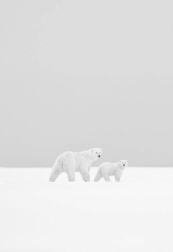 In the White Immensity by Kyriakos Kaziras