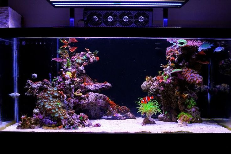 more saltwater aquarium saltwater fish saltwater aquascaping reef tank ...