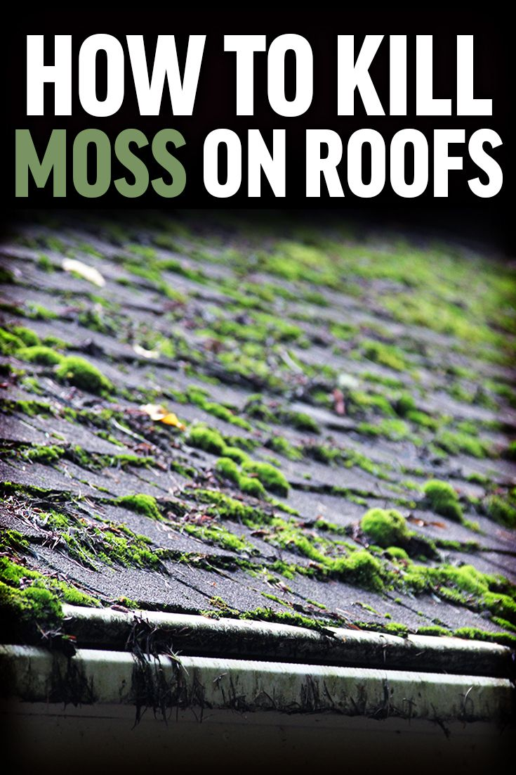 Pin On Moss Control