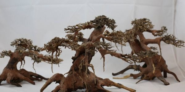 Find the great sale on Bonsai Driftwood for the Large and Small Driftwood. To buy the driftwood pieces with an exclusive price. More query visit here: - http://bonsaidriftwood.com/ and further query call us at 806- 576-8782