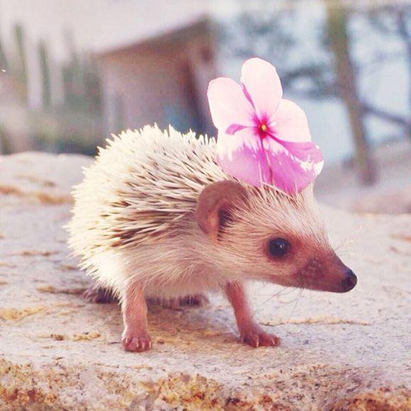 hedgehog-instagram-5