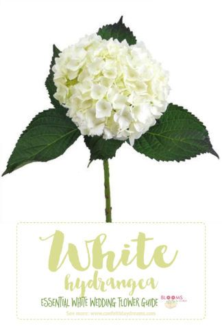 Types of white flowers: White Hydrangea pairs beautifully with Baby's Breath + Roses. Click here for 20+ white wedding flowers: http://www.confettidaydreams.com/types-of-white-wedding-flowers-names/