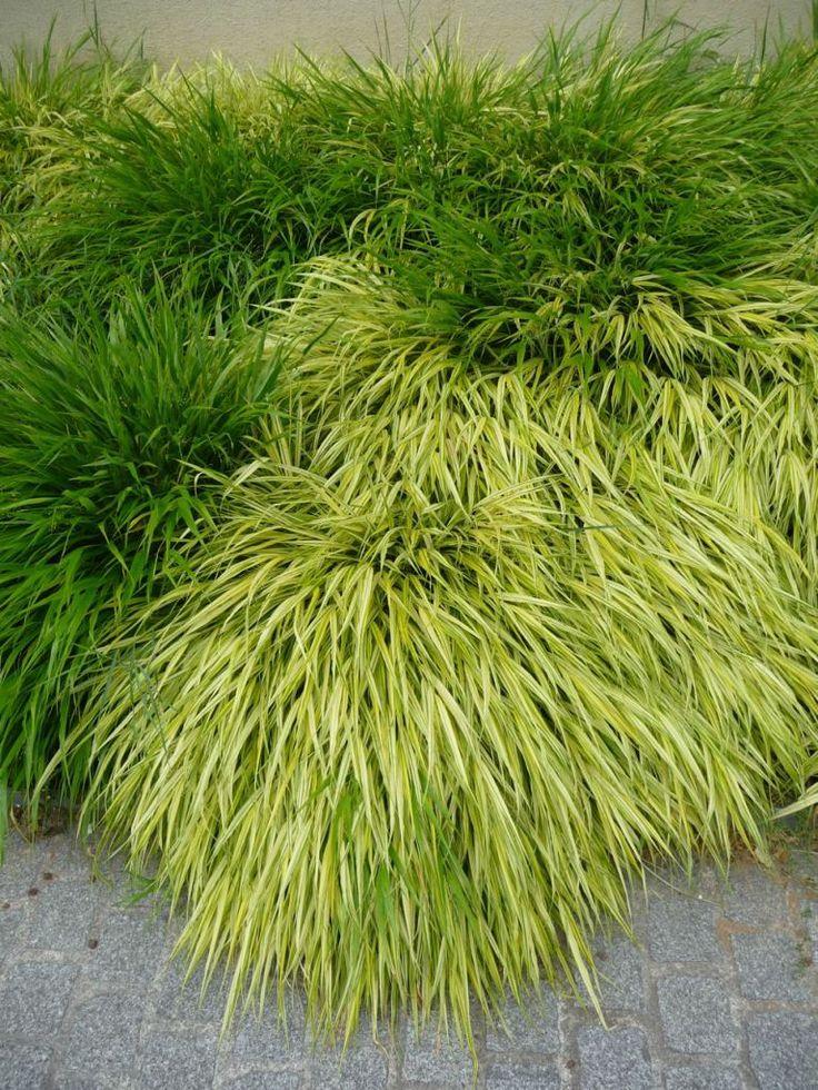 Les 67 meilleures images du tableau couvre sol sur pinterest plante jardin plantes et arbustes - Couvre sol jardin japonais ...