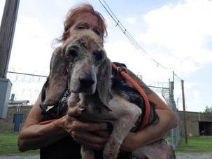 """I just made a donation to """"VILLALOBOS RESCUE SANCTUARY FUND."""" Please help me spread the word about this cause or make a donation yourself. It means a lot to me!"""