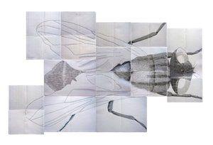 Alessandra Maio - Non sono una mosca bianca (installazione).jpeg