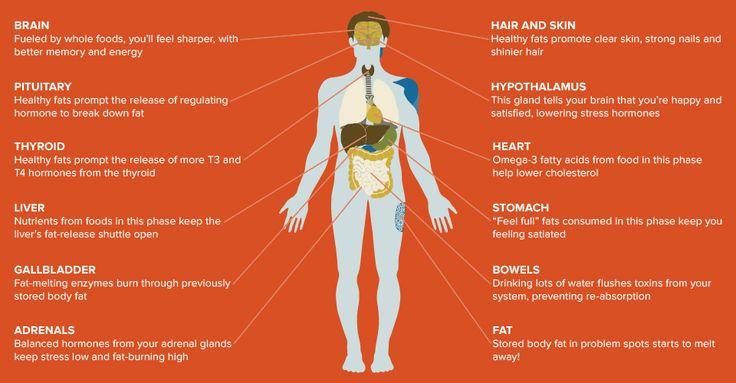 Science Behind the Diet   Haylie Pomroy