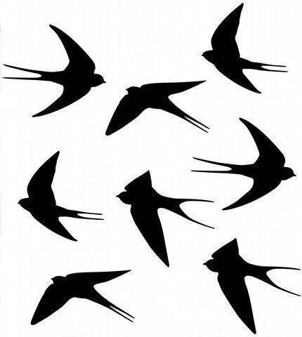 Swallows wall vinyl decal