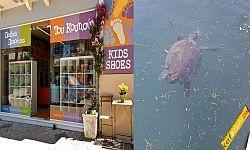 050€ από κάθε πώληση στο κατάστημα Του κουτιού για τη διάσωση της θαλάσσιας χελώνας Καρέττα-Καρέττα - Νεα, Γενικες πληροφοριες.