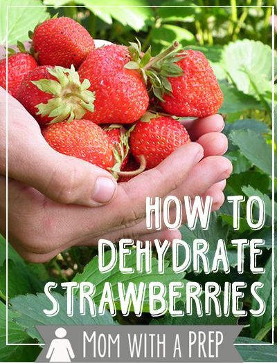 Mom with a PREP | What is the best way of preserving the early summer bounty of strawberries for winter? Dehydrate them! + a quick tip to make hulling strawberries easier!  #prepare4life  #dehydrate