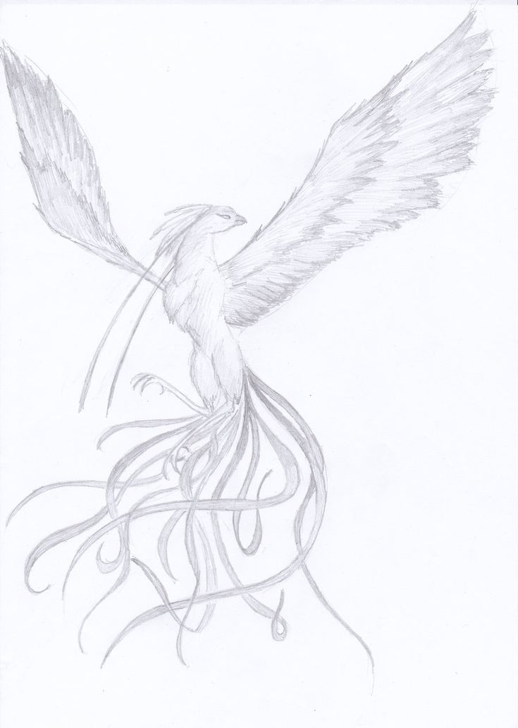 Феникс рисунки поэтапно