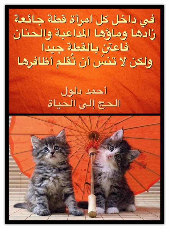 في داخل كل امرأة قطة جائعة زادها وماؤها المداعبة والحنان فاعتن بالقطة جيدا ولكن لا تنس أن ت قلم أظافرها الحج إلى الحياة