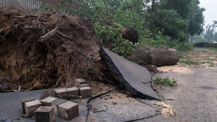 Eine umgestürzte Eiche liegt am frühen Morgen auf einer Straße in Goldenstedt. Die Wurzel hat den Asphalt aufgebrochen