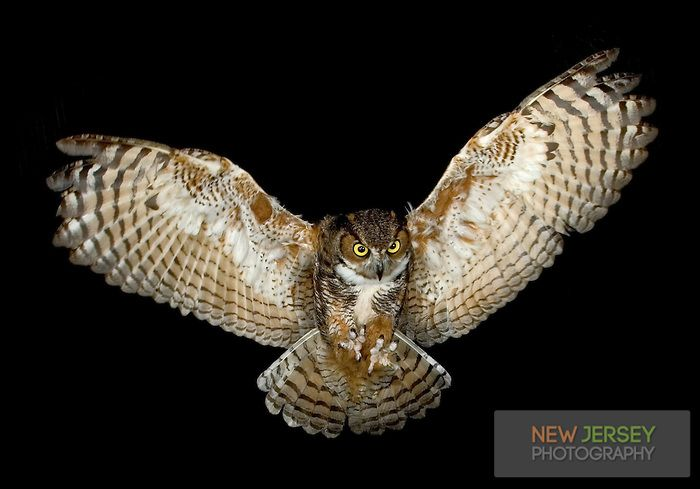 Great Horned Owl Flying Tattoo Great Horned Owl, in f...