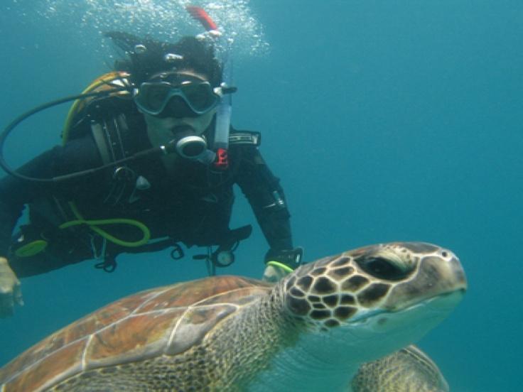 Moana Diving School - Dive School - Diving - Tenerife - Canary Islands
