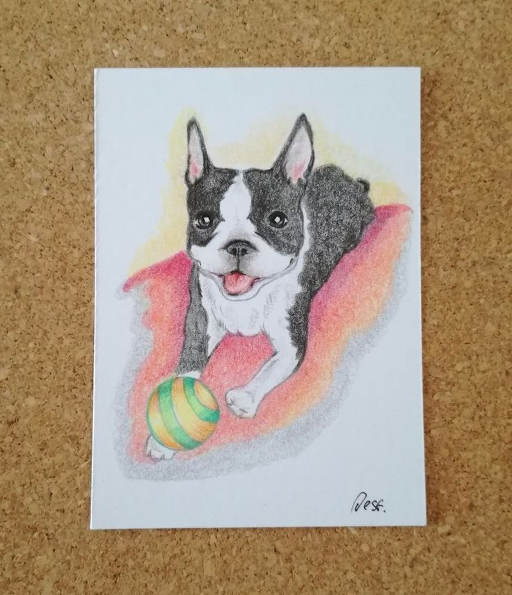 """ACEO colored pencils Boston Terrier """"ball-dog"""" by Desf #Miniature"""