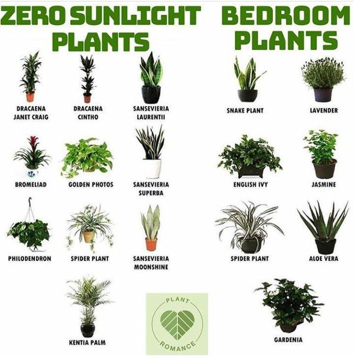 Pflanzen fürs Schlafzimmer! #pflanzen #schlafzimm…