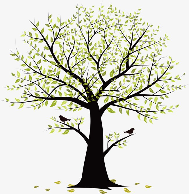 Small Tree Vector Birds Tree Clipart Birds Trees Png Transparent Clipart Image And Psd File For Free Download Tree Illustration Tree Drawing Tree Art