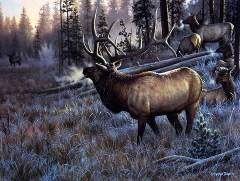 Cynthie Fisher Bull Elk Picture A Worthy Opponent