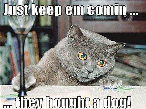 animal humor with captions | Animal Christmas crackers (funny animal photos w/ captions)