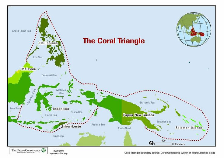 The coral triangle - spanning Indonesia, the Philippines, Malaysia, Papua New Guinea, the Solomon islands and Timor Leste - is home to the highest diversity of marine life on earth!!
