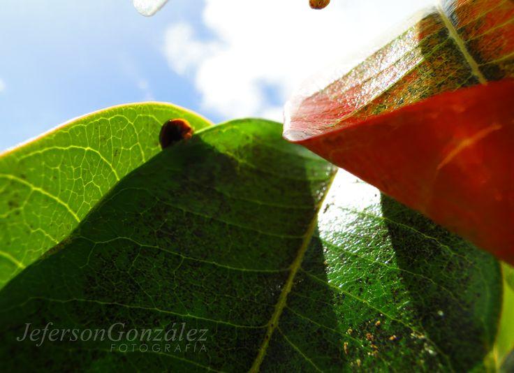 """""""Vivir no es sólo existir, sino existir y crear,  saber gozar y sufrir  y no dormir sin soñar.  Descansar, es empezar a morir."""" Gregorio Marañón #Cielo #Nature #Blue #Green #Colombia #Abejorral #Antioquia #life #peace"""