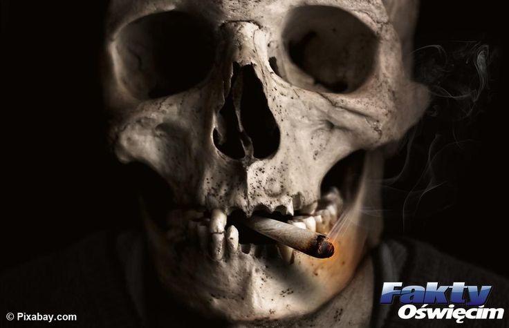 Dziś Światowy Dzień Rzucania Palenia #palenie #papierosy #dzieńbezpapierosa #papieros #zdrowie