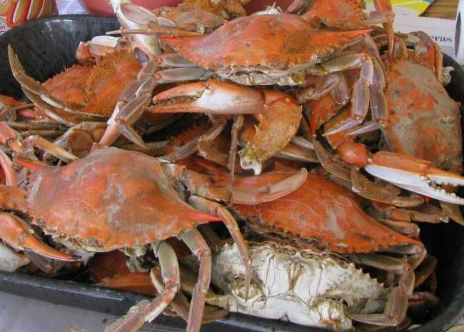 Satisfy Your Fresh Crab Cravings With 13 Top Recipes Blue Crab Recipes Crab Recipes Crab