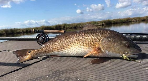 26 Best Redfish Flies Images On Pinterest Fishing Fly