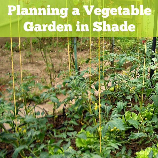 Ten Top Tips For Small Shady Urban Gardens: Think You Can't Grow Vegetables In Your Shady Yard