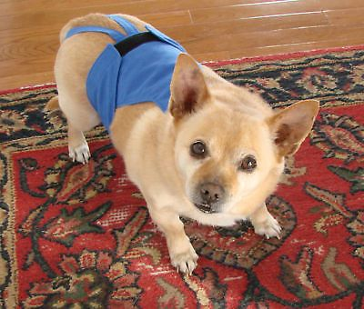 How To Make Dog Diapers For Dogs In Heat