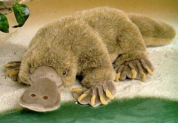 189 Best Images About Platypus On Pinterest White Clay